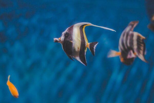 Snorkeling in Fujairah