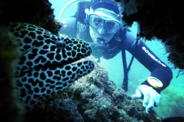 Scuba Diving in Fujairah